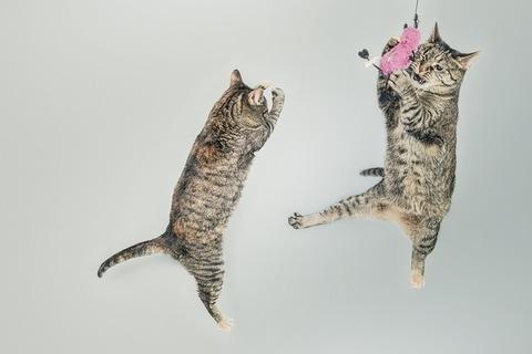 cats-558077_640 (1)