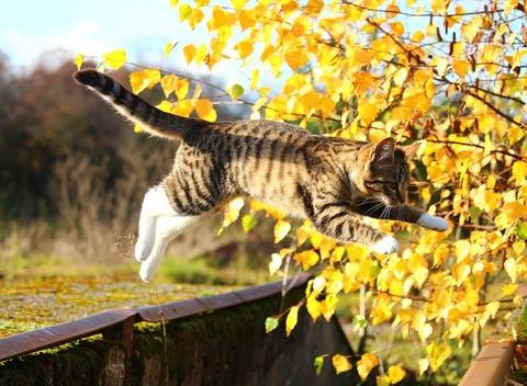 autumn-1033588_640