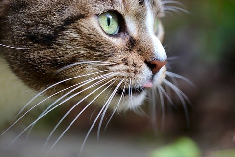 cat-4805756_640