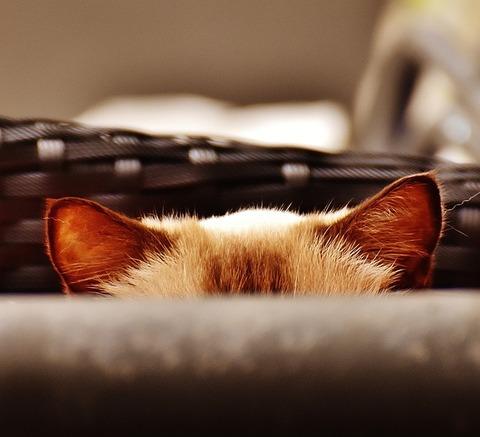 cat-1690622_640