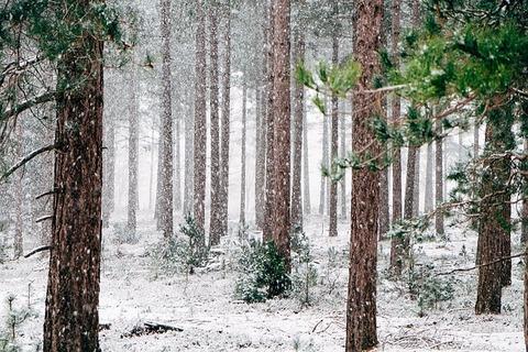 woods-690257_640