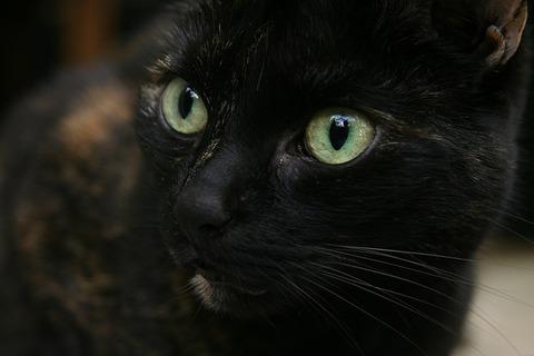 cat-3709991_640