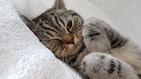 cat-2778603_640