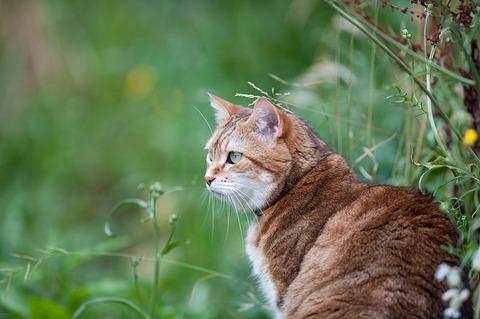 cat-825365_640