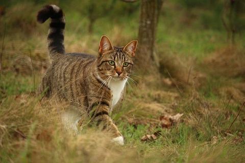 cat-2219427_640