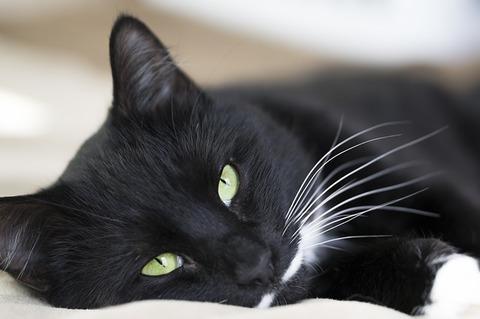cat-3430570_640