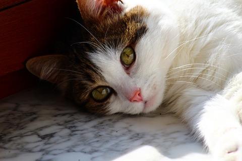 cat-4160102_640