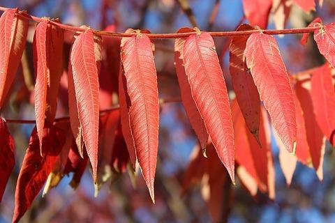 autumn-3749686_640