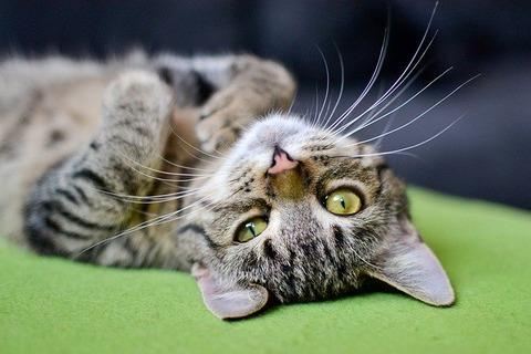 cat-3062885_640