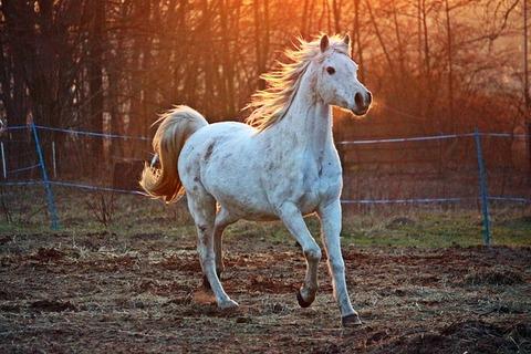 horse-2063672_640