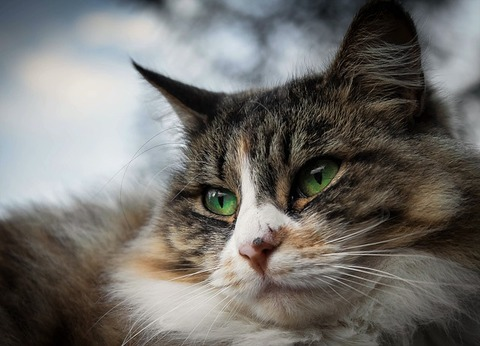 cat-1978396_640