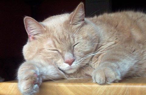 cat-17862_640