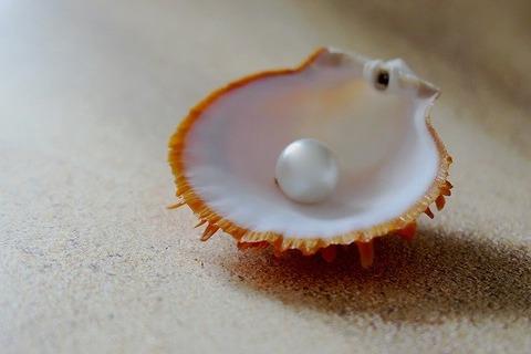 shell-3480818_640