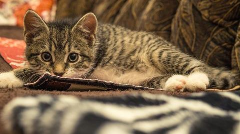cat-4626681_640