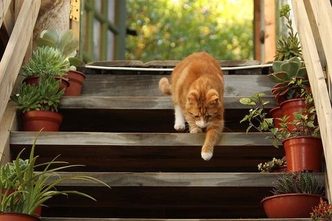 cat-1846356_640