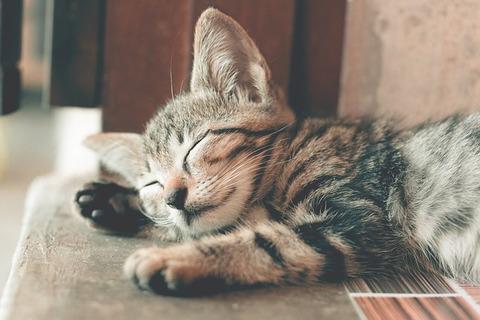 cat-3362148_640
