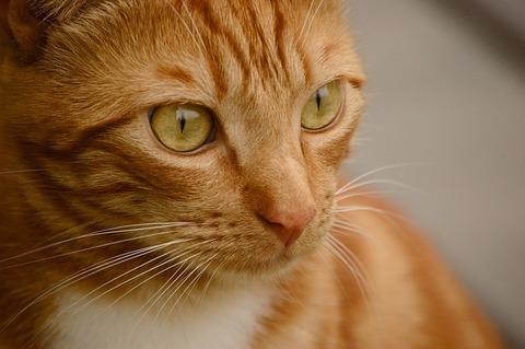 cat-3791817_640