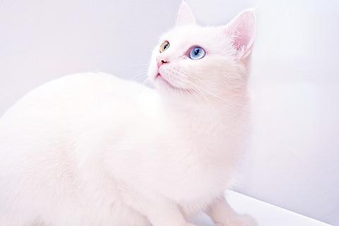 cat-3677523_640