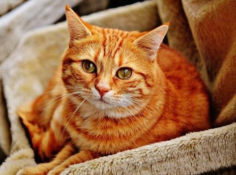 cat-1046544_640