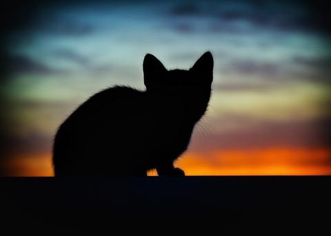 cat-1759228_640