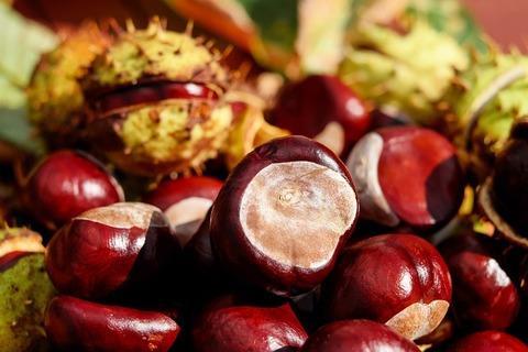chestnut-1710748_640