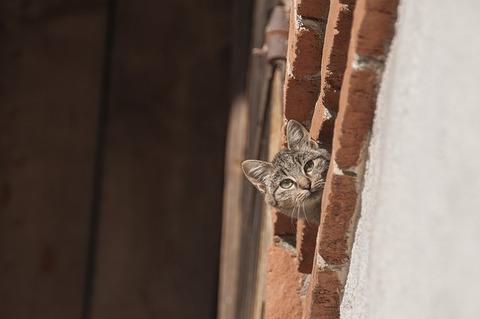 cat-3003431_640