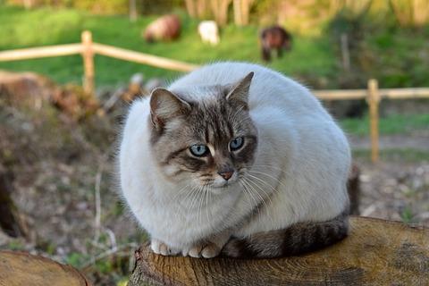 cat-4125536_640