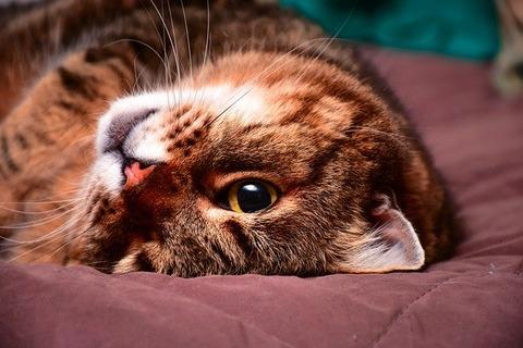 cat-1952713_640