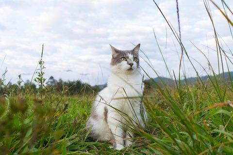 cat-4758941_640