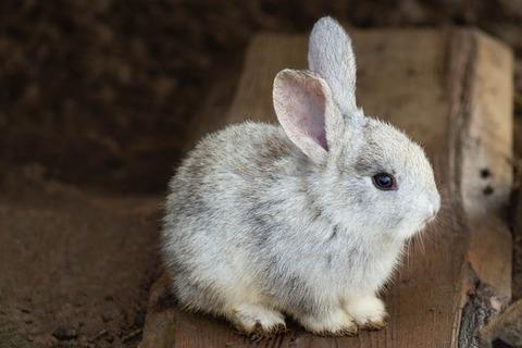 rabbit-3578422_640