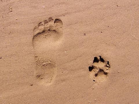 footprint-261337_640