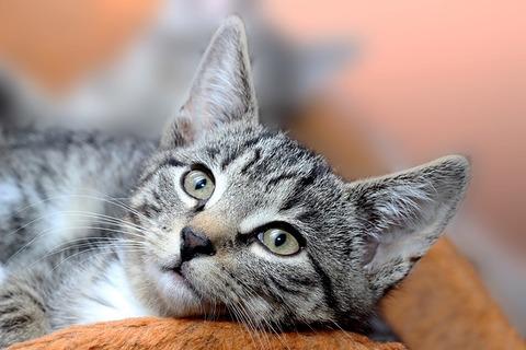 cat-3482912_640