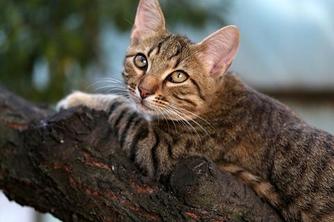 cat-3806277_640