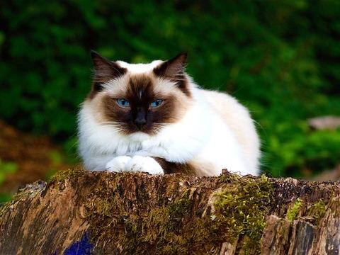 cat-1615779_640
