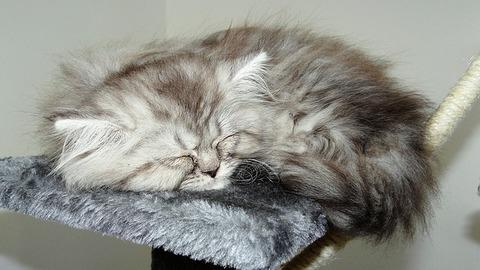 cat-2392059_640