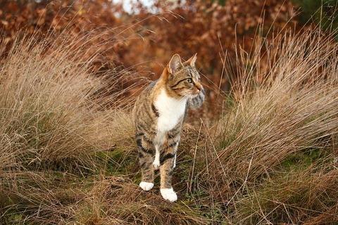 cat-1817807_640