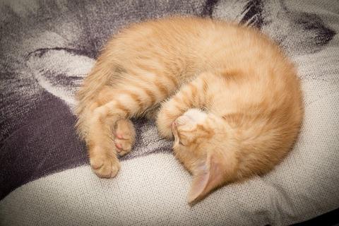 cat-868870_640