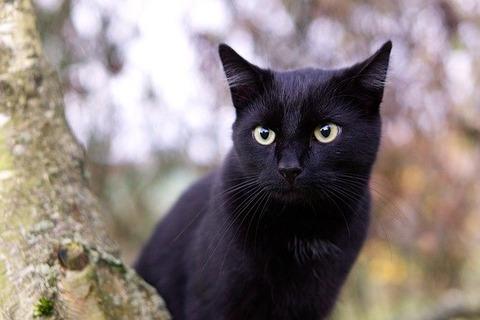 cat-2902599_640 (1)