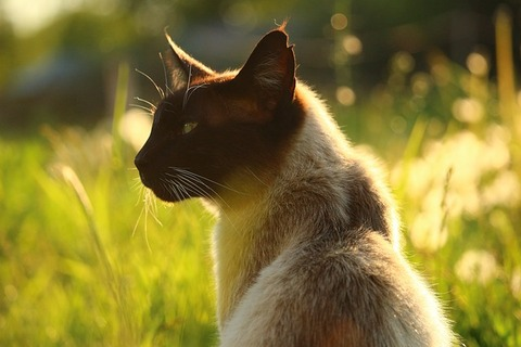 cat-2332451_640