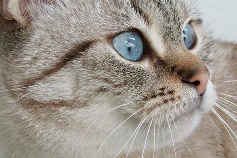 cat-3560967_640