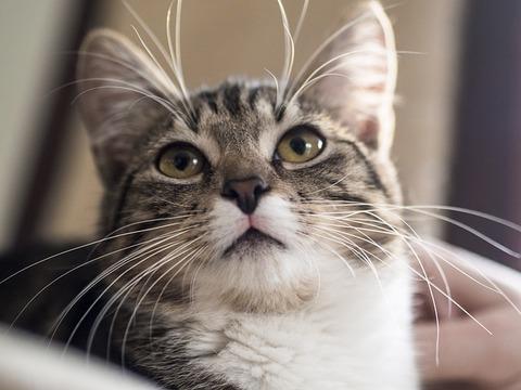 cat-3008775_640