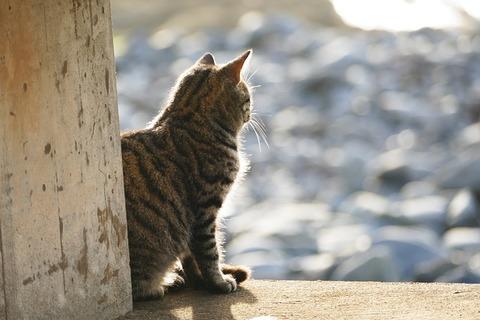 cat-3463059_640