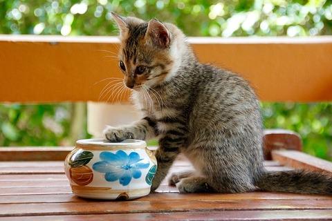 cat-1189813_640