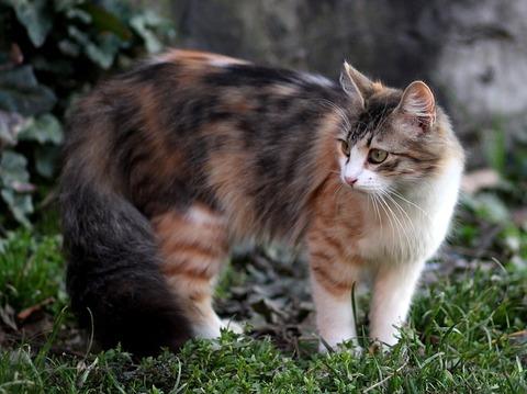 cat-3280543_640