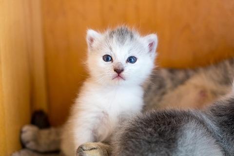 kitten-3411713_640