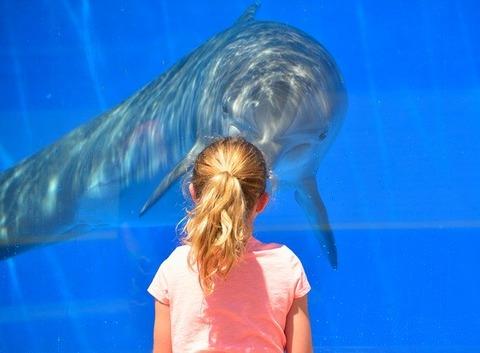 dolphin-1548448_640