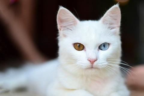 kitty-2903812_640