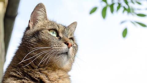 cat-686567_640