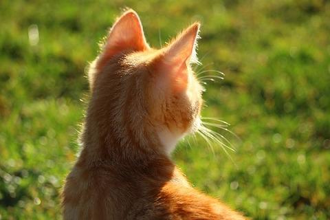 cat-1196242_640