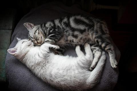 kitten-4273665_640